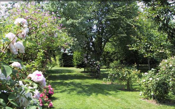 roseraie le mans sarthe jardin remarquable pays de la loire. Black Bedroom Furniture Sets. Home Design Ideas